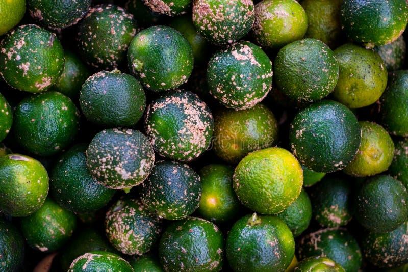 Fylld ram av ekologisk och juicy calamansi AKA citrus microcarpa, calamondin eller filippinsk kalk, som används för citonad och m arkivbild