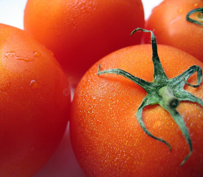 Fylliga Mogna Tomater Arkivfoto