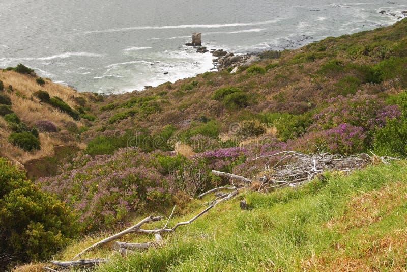 Fynbos nas filiais secas do shorewith do mar imagens de stock royalty free