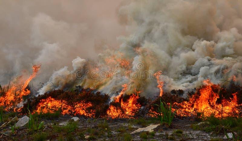 Fynbos-verheerendes Feuer lizenzfreie stockfotos
