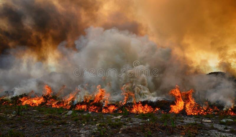 Fynbos-verheerendes Feuer stockbild