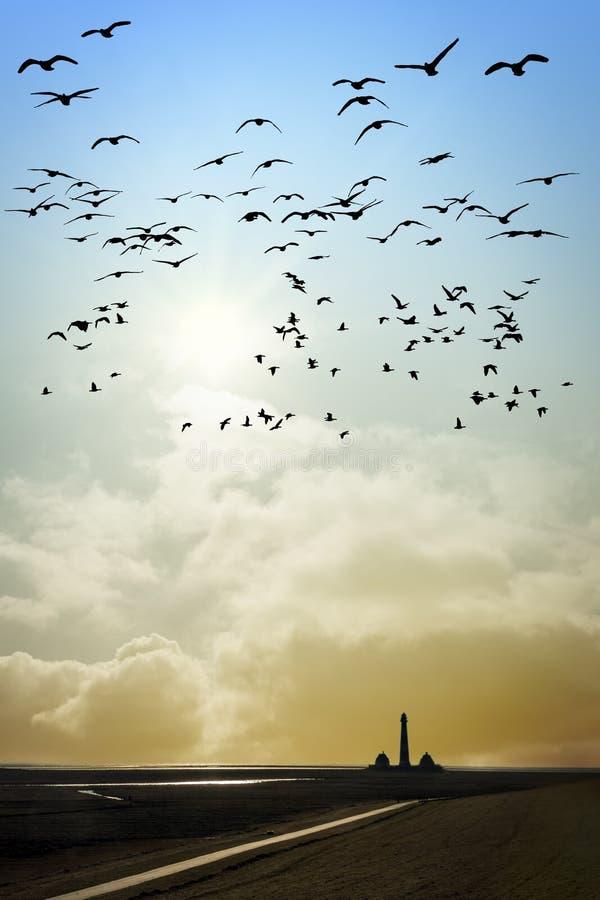 Fyr med fåglar arkivfoto