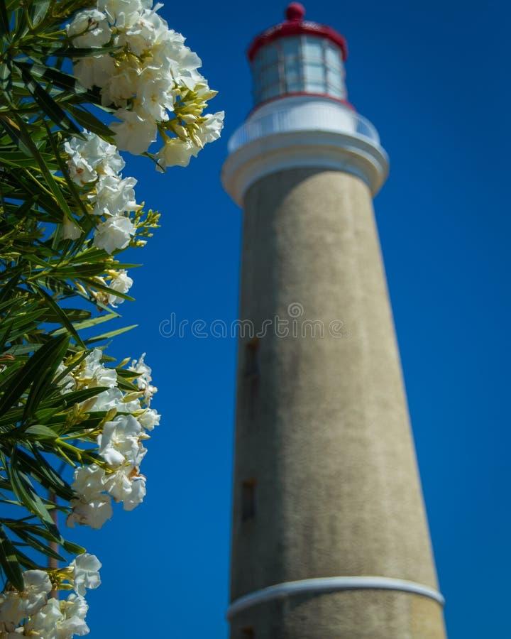 Fyr och blommor royaltyfri fotografi