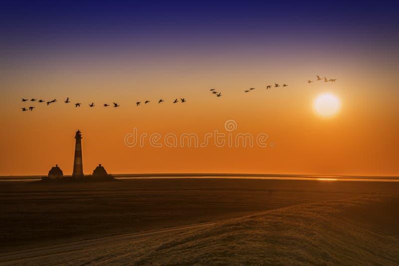 Fyr på solnedgång med fåglar royaltyfria bilder