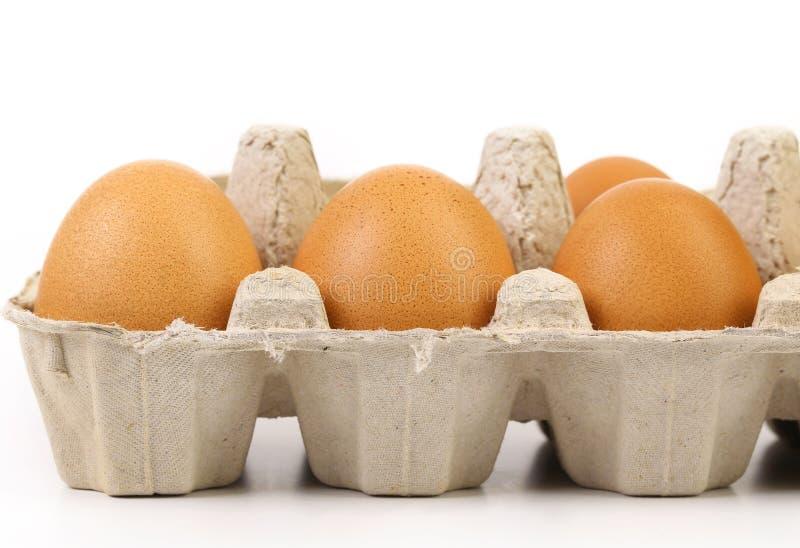 Fyra bruna ägg i äggask arkivfoto