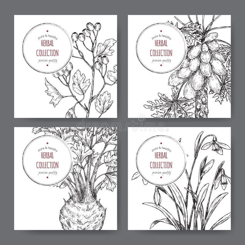 Fyra etiketter med det gemensam hagtorn, selleri, papayaträdet och snödroppe skissar royaltyfri illustrationer