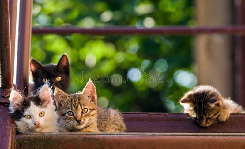 Fyra färgrika kattungar på en naturlig bakgrund Sommarskott royaltyfria bilder