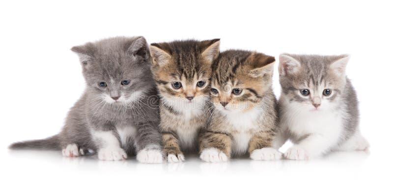 Fyra förtjusande kattungar arkivfoton