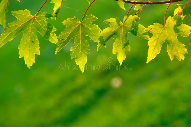 Fyra gröna sidor royaltyfri fotografi