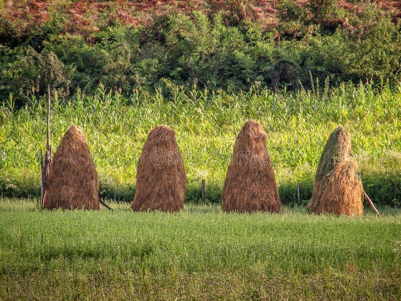Fyra höbaler på ängen royaltyfria bilder
