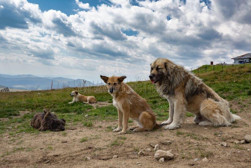 Fyra hundkapplöpning som sitter i natur arkivfoto