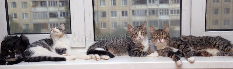 fyra katter ligger royaltyfri foto