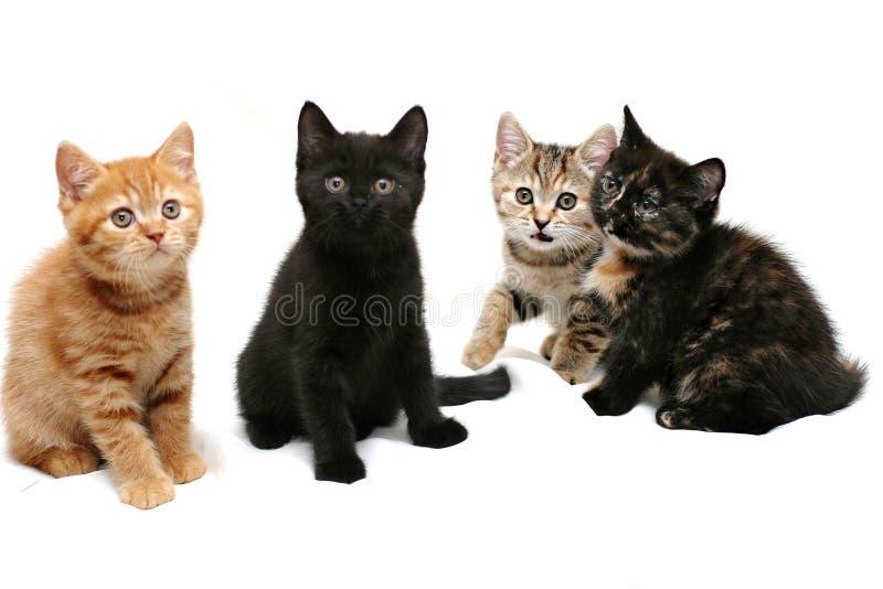 fyra kattungar arkivbild
