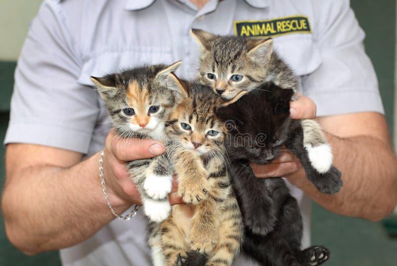 Fyra kattungar i de manliga händerna Djur räddningsaktion fotografering för bildbyråer