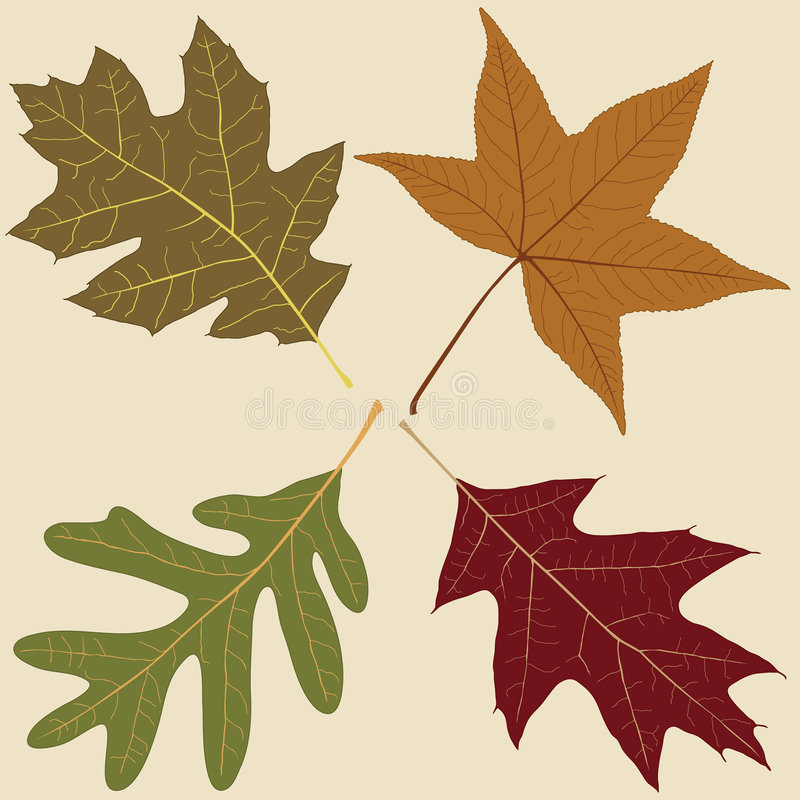 fyra leaves vektor illustrationer