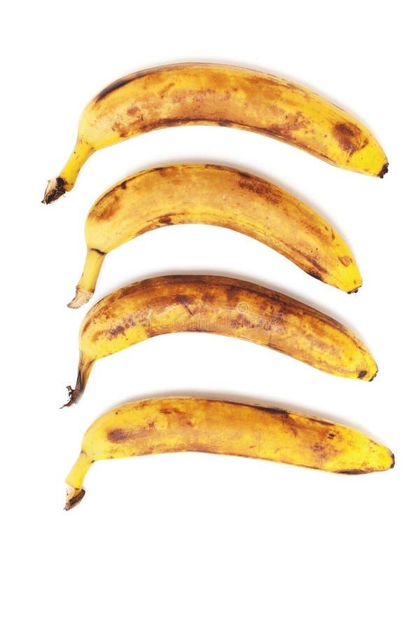 Fyra mogna bananer är separat i vertikal rad arkivbild