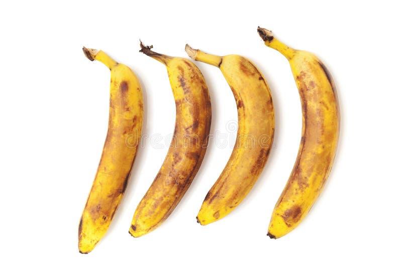 Fyra mogna bananer är separata i horisontal royaltyfri bild
