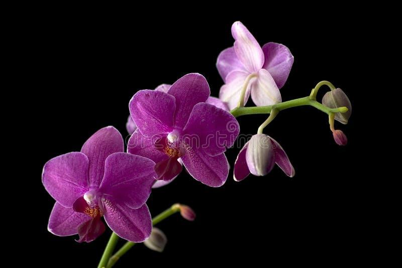 fyra orchids royaltyfri bild
