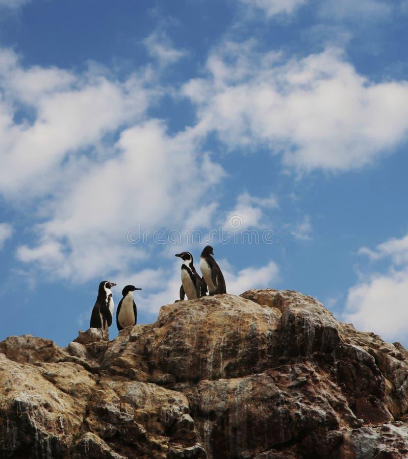 fyra pingvin royaltyfria bilder