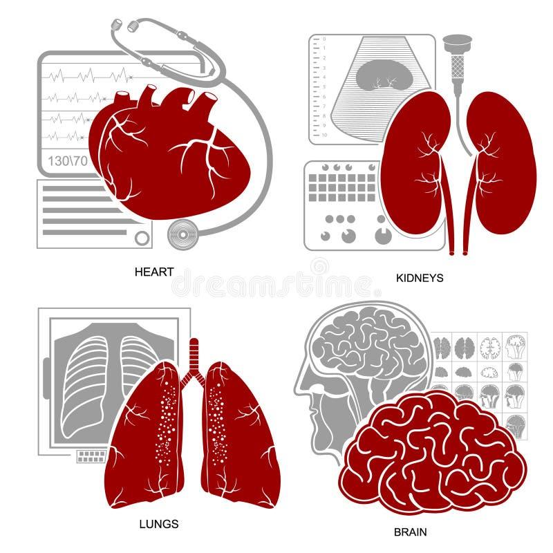 Fyra plana njure för hjärna för lungor för hjärta för designmedecinesymbol vektor illustrationer