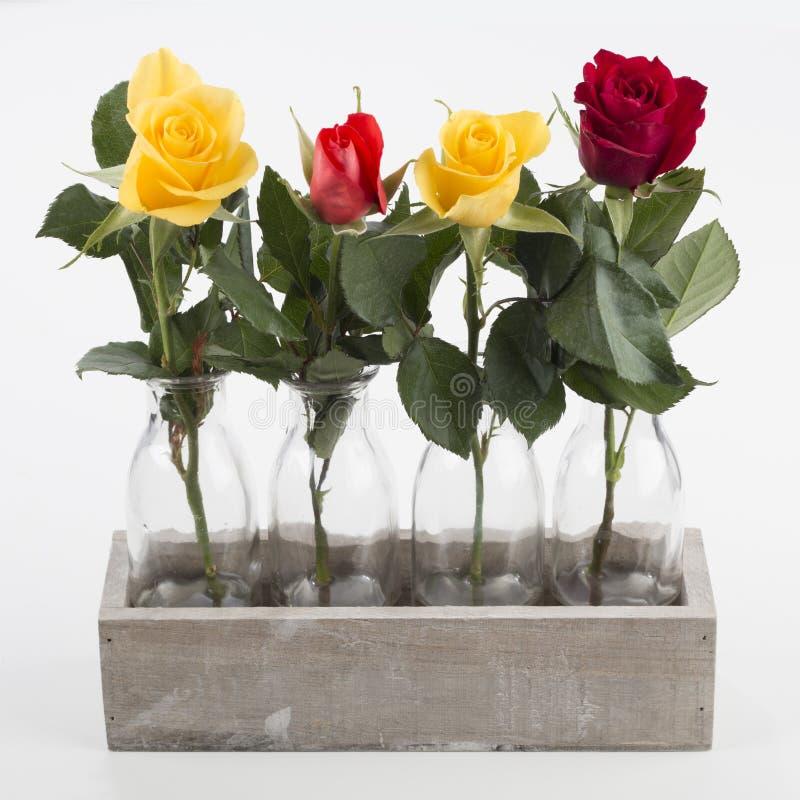 Fyra rosor i fyra vaser som isoleras arkivfoto