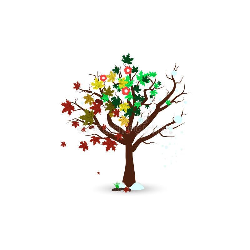 Fyra säsong i isolerade träd ett, träd för naturmiljölönn vektor illustrationer