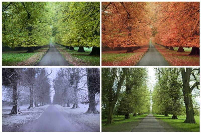 fyra säsonger royaltyfria foton