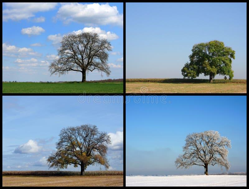 fyra säsonger royaltyfria bilder