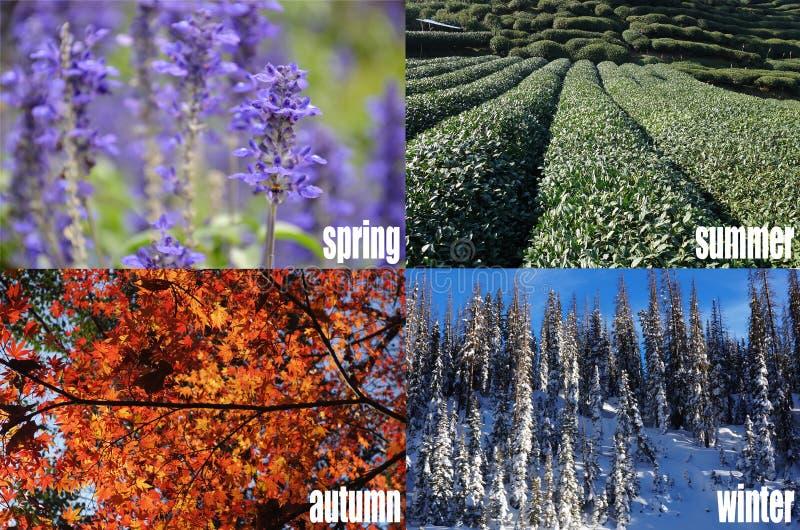 Fyra säsonger av året arkivbilder