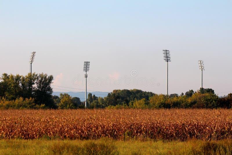 Fyra stora högväxta stadionreflektorljus som högt stiger ovanför stadion och träd bak torrt gräs och cornfield på solnedgången royaltyfri bild