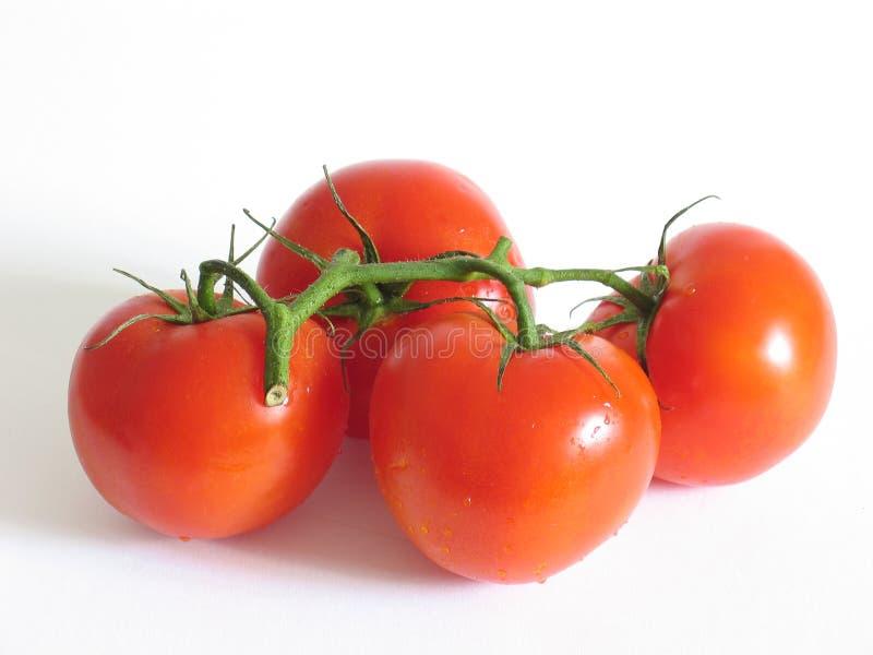 fyra tomater royaltyfria foton