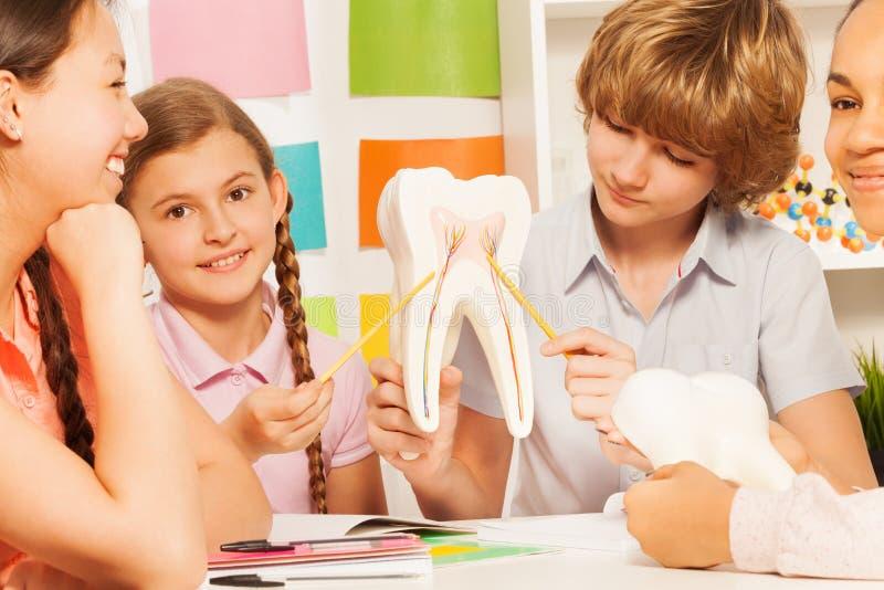 Fyra tonår som studerar tandstrukturen på klassrumet royaltyfri bild