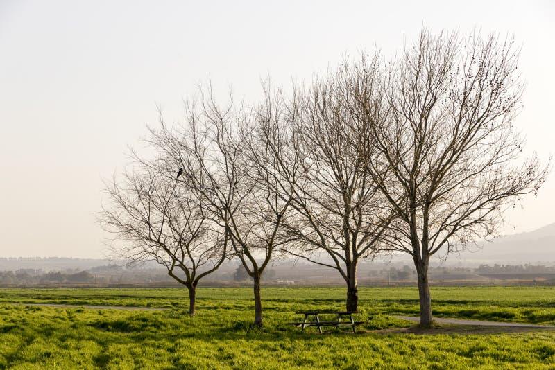 fyra trees arkivbild