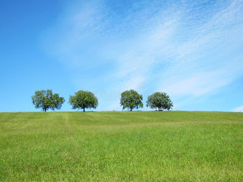 Trees med blåttsky och moln (30) arkivbilder