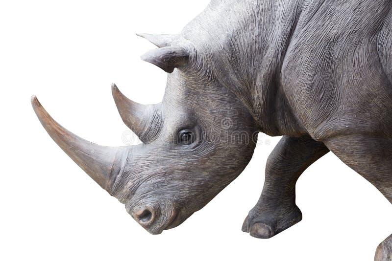 Fyrkant-lipped noshörning som isoleras på vit bakgrund fotografering för bildbyråer