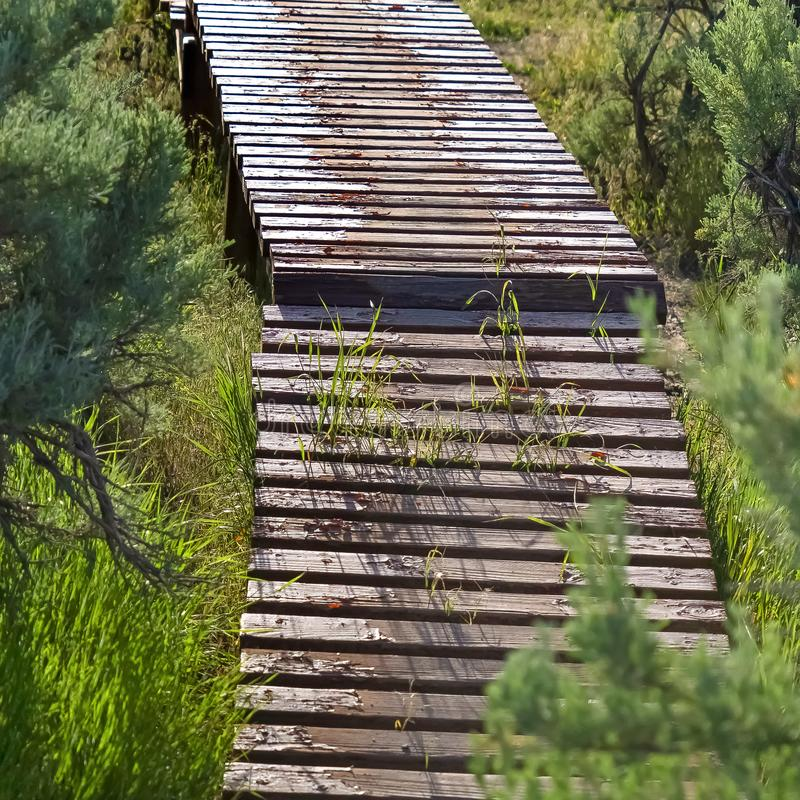 Fyrkanten stänger sig upp av träcykelspåret som byggs på en kulle som beskådas på en solig dag arkivbilder