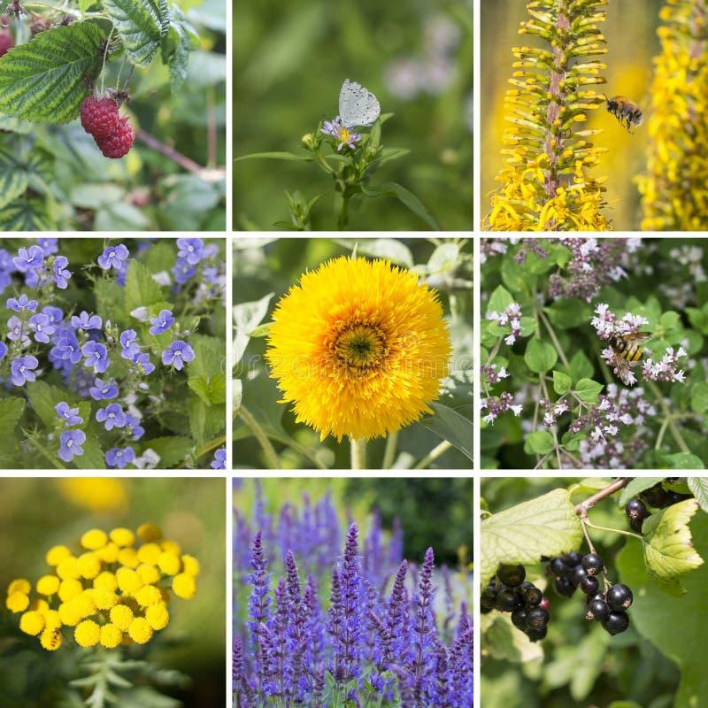 Fyrkantig collage av sommarplatser: växter frukter, kryp royaltyfria foton