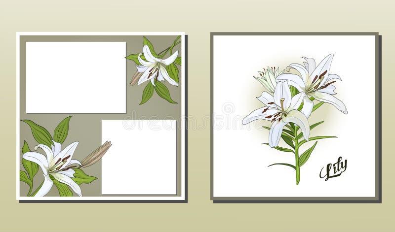Fyrkantig vykort och affisch med blommor för vit lilja vektor illustrationer
