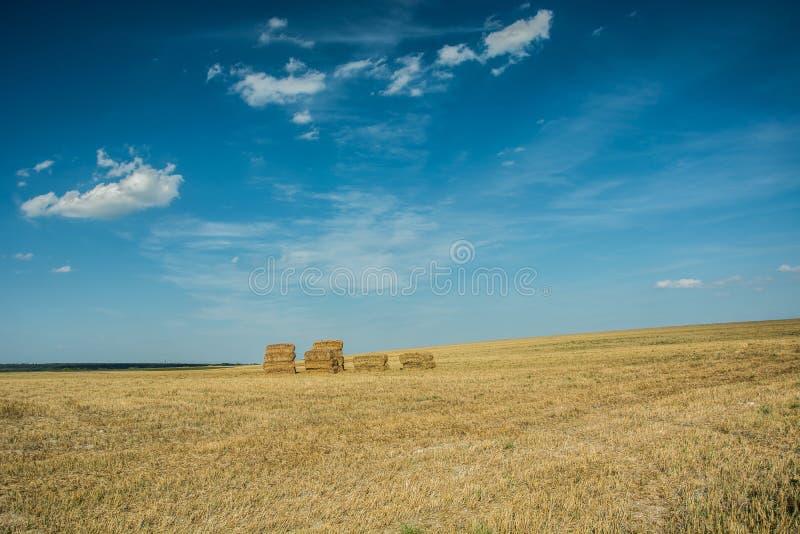 Fyrkantiga höbaler på fältet och den blåa himlen royaltyfri fotografi
