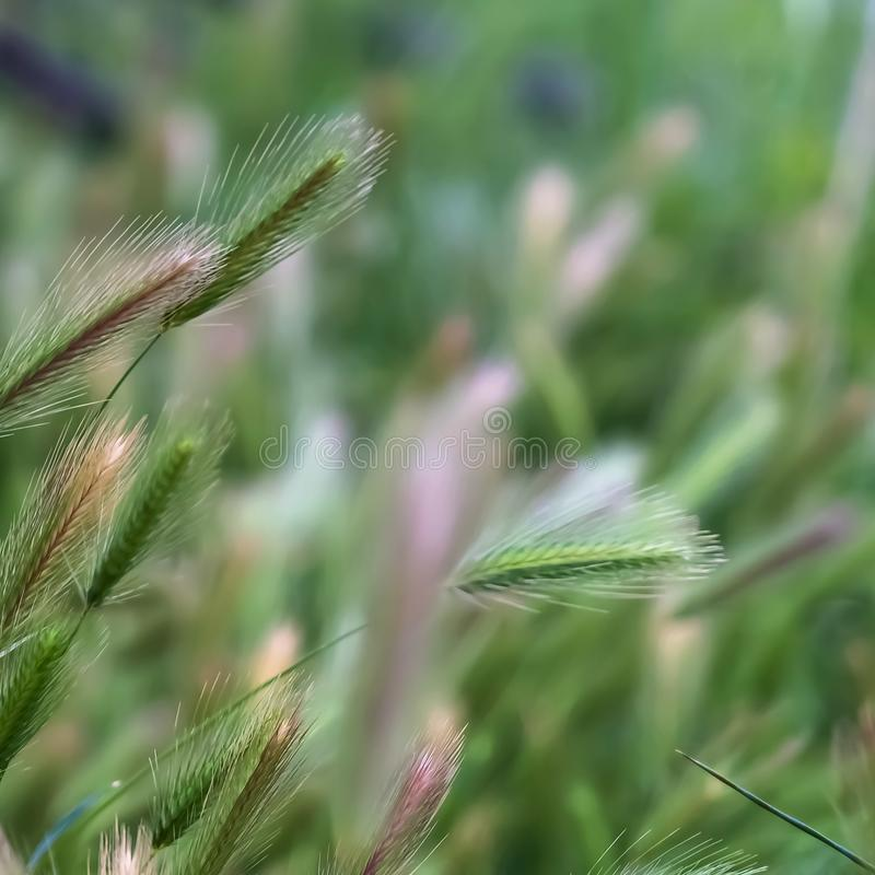 Fyrkantigt ramslut upp sikt av frodiga gröna gräs som växer i skogvildmarken royaltyfria foton