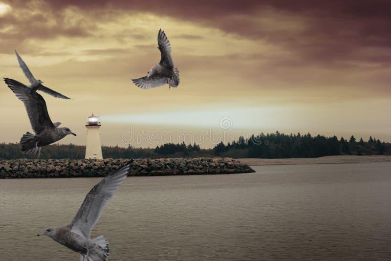 fyrseagulls arkivbild