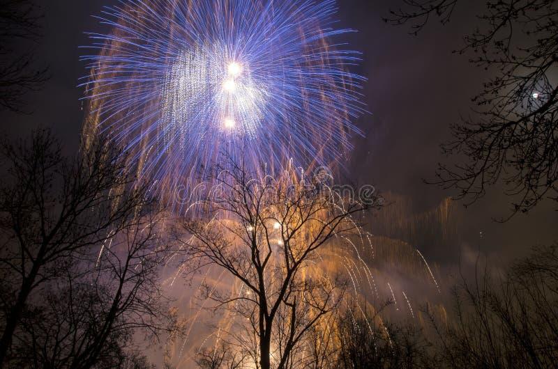 Fyrverkerier i himlen ovanför träden royaltyfri fotografi