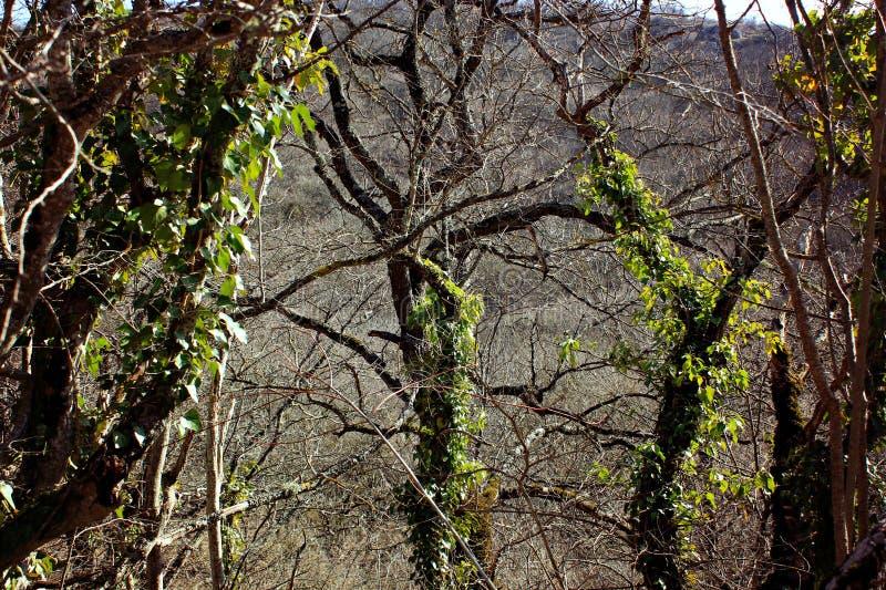 Góry i drzewa w wczesnej wiośnie, zdjęcie stock