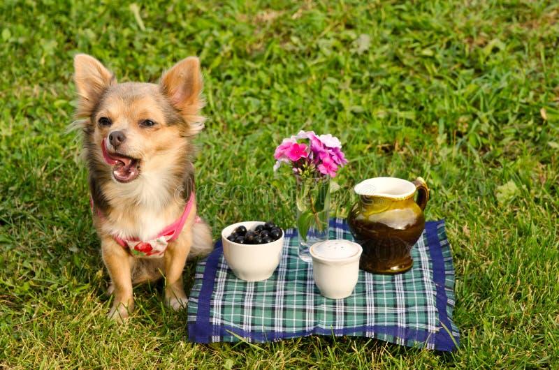 Gähnender Welpe am Picknick im sonnigen Park lizenzfreie stockfotos