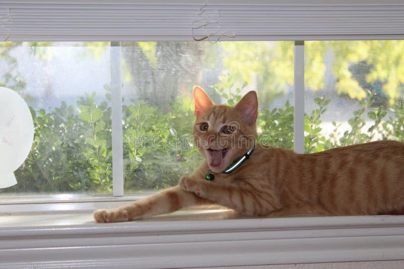 Gähnendes Kätzchen stockfoto