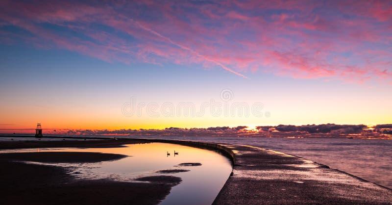 Gänse schwimmen unter rosa Sonnenaufgang lizenzfreies stockfoto