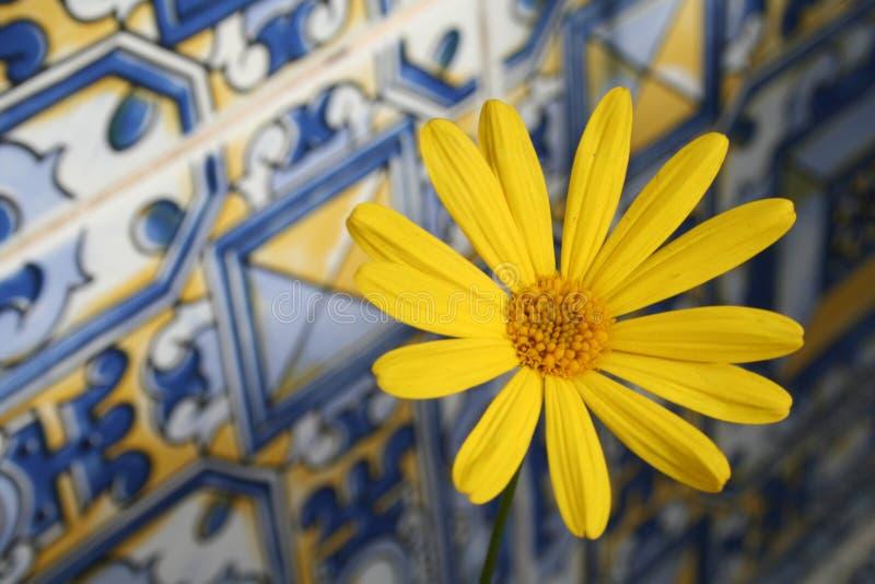 Gänseblümchen auf andalusischen Fliesen lizenzfreies stockfoto