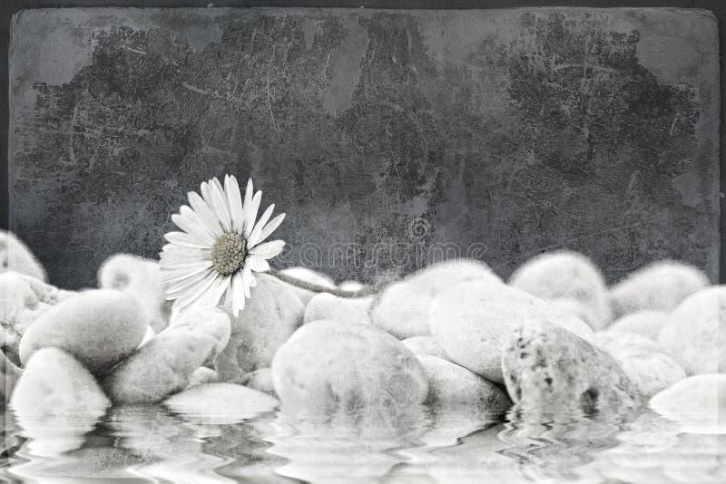 Gänseblümchen auf dem Strand. Blumengrunge Hintergrund stockfoto