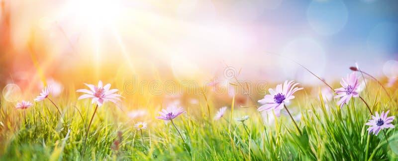 Gänseblümchen auf Feld - abstrakte Frühlings-Landschaft lizenzfreies stockbild