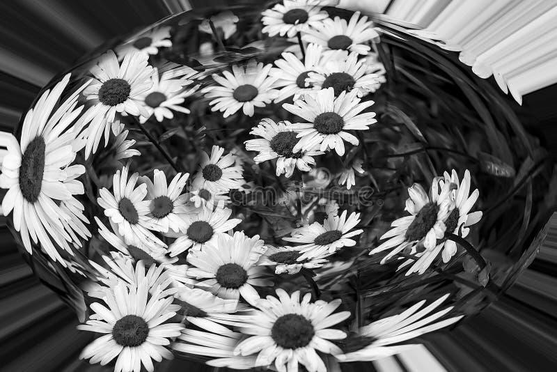 Gänseblümchen in einer Kapsel, Abstraktion Schwarzweiss stockbilder